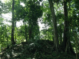 Mayan forests