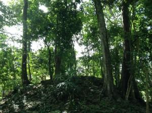 グアテマラの森