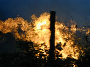 Mayan forest was burned.