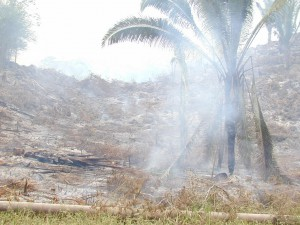 burned Mayan forest