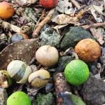 ramon nuts