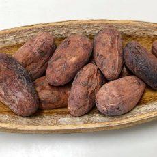 マヤナッツとカカオ豆でチョコレート作りワークショップ